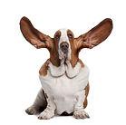cane ascolto.jpg