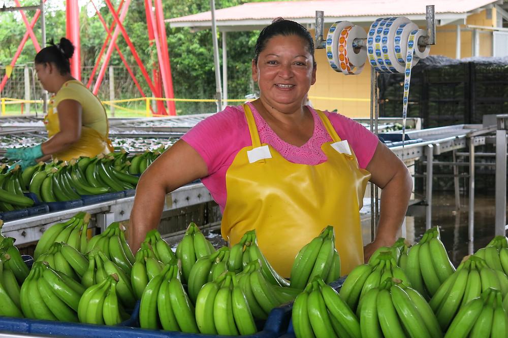 Woman working in banana farming in Ecuador