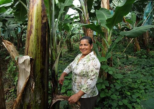 Rainforest Alliance farm owner Fanny Araujo Durán in Ecuador.png