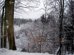 Vinter i Søhøjlandet