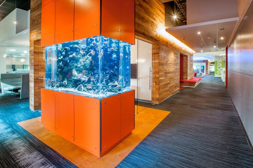 aquarium-2jpg