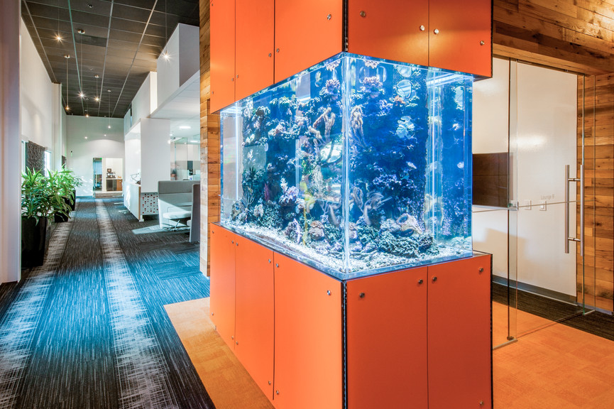 aquarium-1jpg