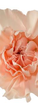 Novia Flower.jpg