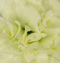 Jade _ Flower