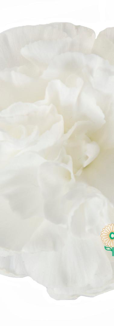 Blanquita Flower.jpg