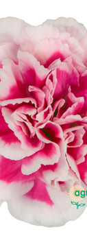 Skyline Flower.jpg