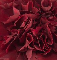 Zurigo _ Flower