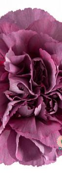 Hypnosis Flower.jpg