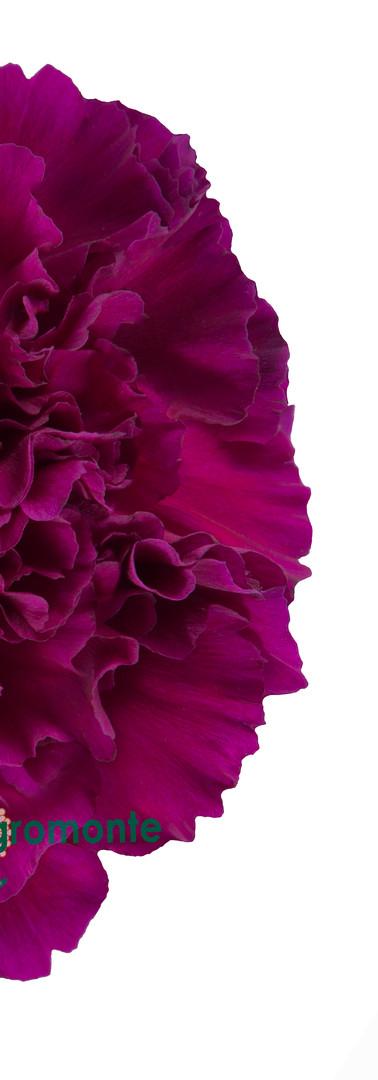 Golem Flower.jpg