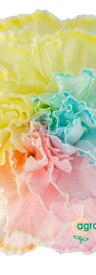 Tinted 1801 Rainbow Pastel Flower.jpg