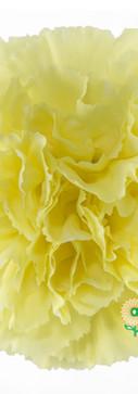 Diletta Flower.jpg
