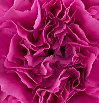 Farida Flower.jpg