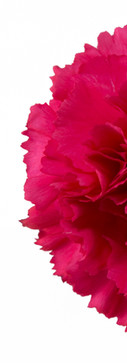 Bizet Flower.jpg