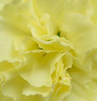 Timana _ Flower