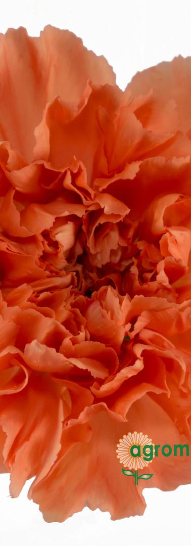 Hermes Orange Flower.jpg
