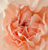 Novia _ Flower