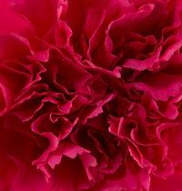 Bizet _ Flower