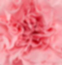 Joshua Flower.jpg