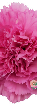 Birmania Flower.jpg