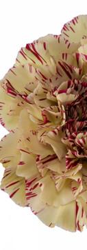 Paoletto Flower.jpg