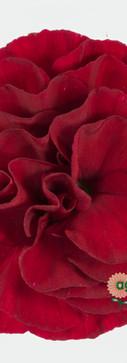 Chateau Flower.jpg