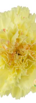 Hermes Flower.jpg
