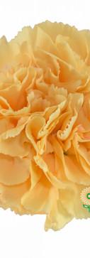 Caroline Gold Flower.jpg