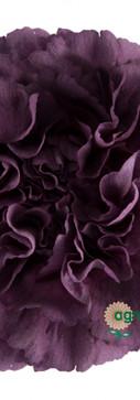 Extasis Flower.jpg