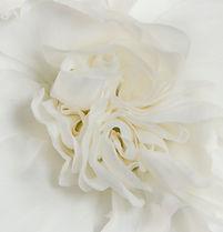 Ada _ Flower