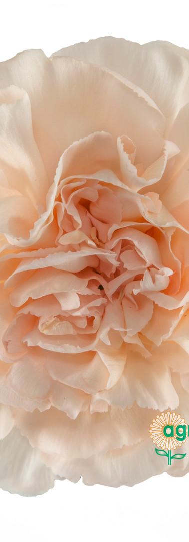 Lizzy Flower.jpg