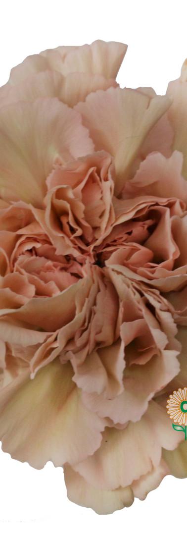 Caramel Flower.jpg