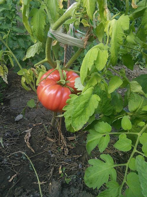 Арбуз (Watermelon beefsteak)