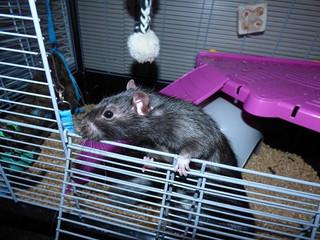 Nouveau recueil Flip le rat