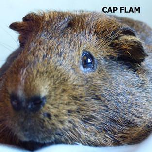 CAP FLAM