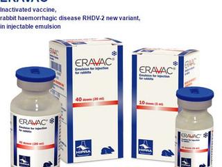 Nouveau vaccin contre la VHD2 Eravac
