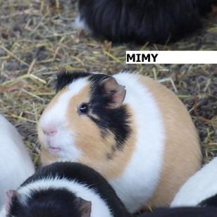 MIMY.