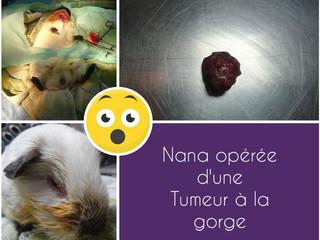 Chirurgie pour Nana : tumeur de 3 cm sous la gorge