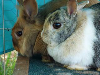 Et bien trop tard, Basil et Lucky adoptés