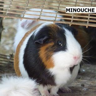 MINOUCHE.