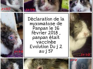 Evolution de la myxomatose chez Panpan