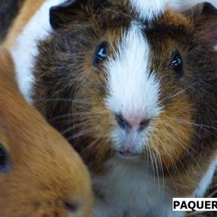 PAQUERETTE.