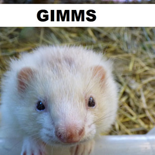GIMMS