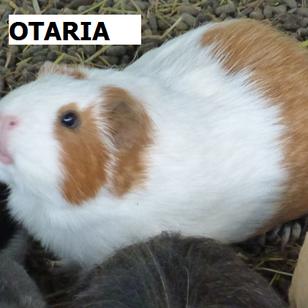 OTARIA.