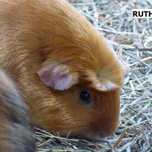 RUTH.