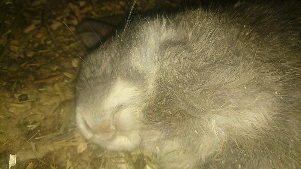 Artic qui passe ses journées à dormir
