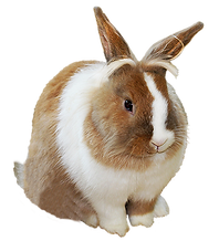 bunny-png-cute-easter-bunny-clipart-376.
