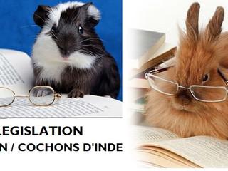 Legislation sur la détention de lapin , cochons d'inde et rongeurs