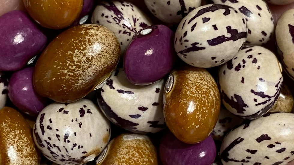 Bean seeds - Out of Stock