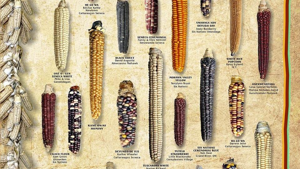 Haudenosaunee Corn poster