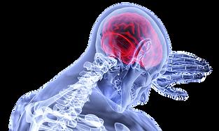 brain-3168269_640.png